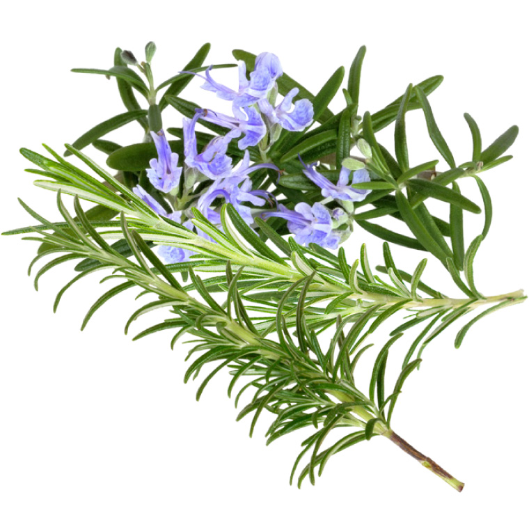 acné plantes