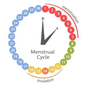 Naturel acné solution - Cycle menstruel