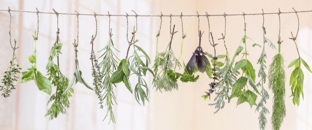 plants herbs